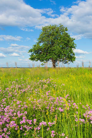vacant land: trees in the middle of the green field on a background of blue sky with clouds Stock Photo