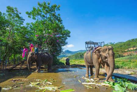 Vietnam, 27 NOV 2014; The farm of elephants not far from Dalat.