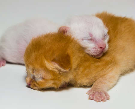 Solo un gattino appena nato da un paio d'ore Archivio Fotografico - 91466061