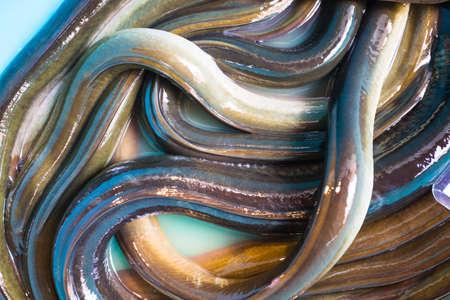 Lot of eels in the fish market in Turkey