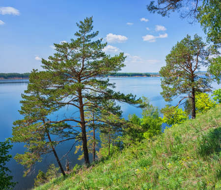 Pine trees on the slope of the Zhiguli mountains on the background of the Volga river near Samara in Russia