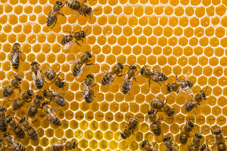 Close up view of the working bees on honey cells Archivio Fotografico