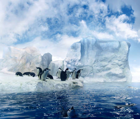 bunch of penguins sitting on melting ice floes in the antarctic region