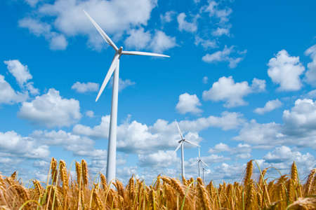 windfarm: wind turbines in rural area in a wheat field in front of a beautiful blue sky Stock Photo