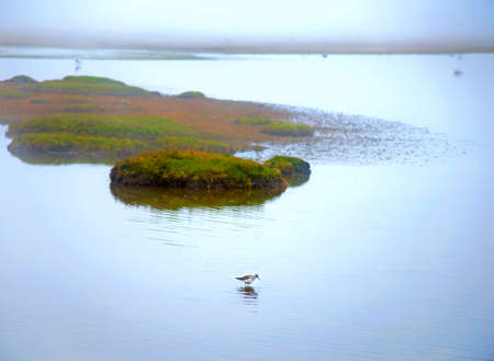 Fog over a lake with birds looking for food, with a little island in the center. Limpiopungo, Cotopaxi National Park, Ecuador. Stock Photo