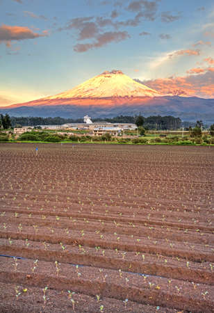 Cotopaxi volcano with sunset light shinning on its slopes, and crops in the foreground, Ecuador.