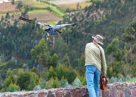 Bird trainer sending an eagle to fly across the Ecuadorian Andes, at a bird conservation park, near by Otavalo, Ecuador. Фото со стока