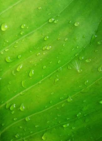 green leaf and drop water Фото со стока