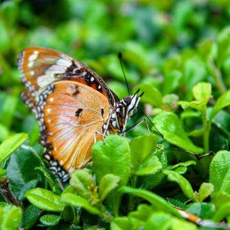 A beautiful orange color butterfly on a leaf Фото со стока
