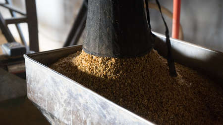 rice harvest: Rice Paddy of rice harvest