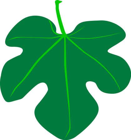 feuille de vigne: Un Fig Leaf Illustration