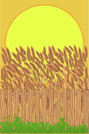 A crop field with a wooden fence and a large sunset  Stock Vector - 16352004