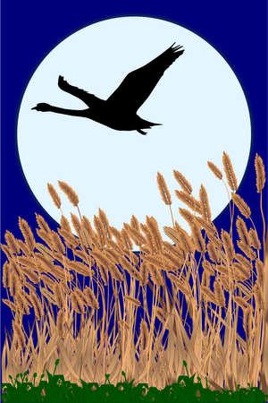 a silouette of a swan flying in front of the full moon and over a field of grass Stock Vector - 16352003
