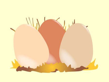 Three chicken eggs nestled together in the nest Stock Vector - 16782879