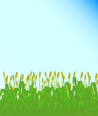 clump: Grass in seed set against a blue sky background Illustration