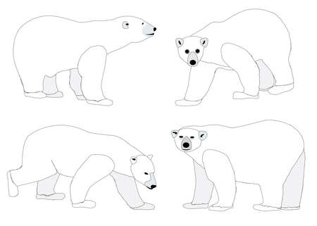 A collection of four polar bear sketches  Vector