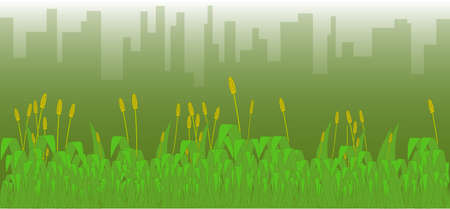 sod: A grass footer overlooked by a misty morning cityscape