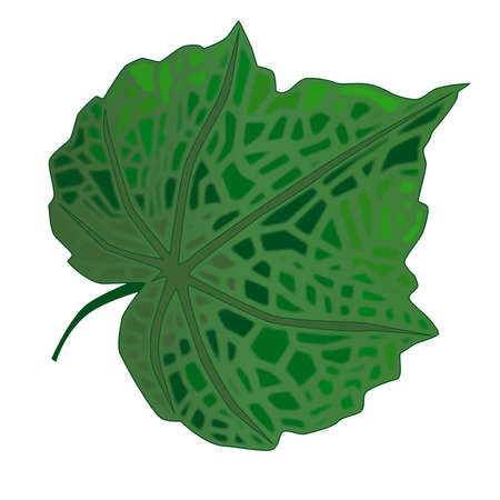 heart shaped leaves: A green fresh leaf isolated over a white background