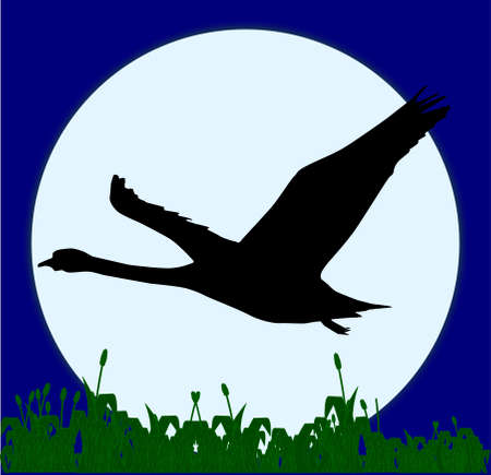 harvest moon: a silouette of a swan flying in front of the full moon and over a field of grass  Illustration