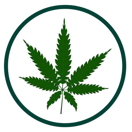 cannabis sativa: A cannabis leaf button isolated over a white