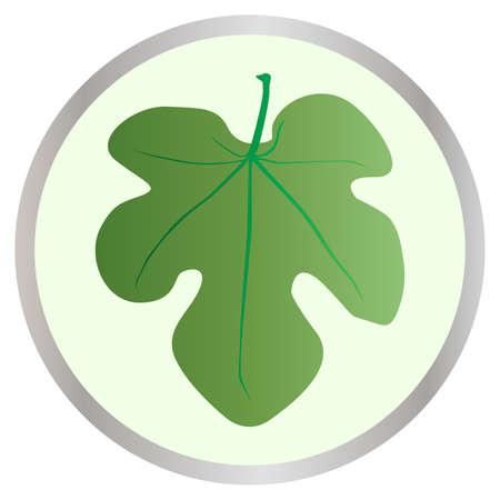 fig leaf: A fig leaf  Illustration