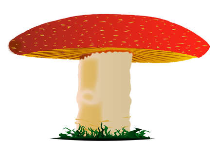 A red and white speckled mushroom Vector