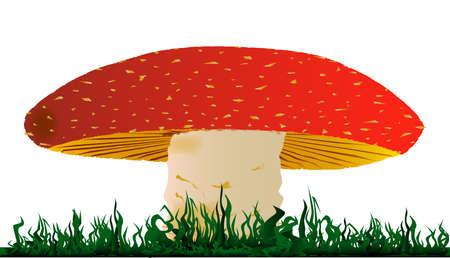 toadstool: Grande fungo piatto isolato su uno sfondo bianco