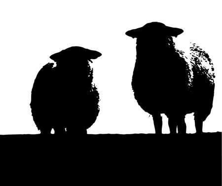 Two sheep standing on a hillside isolated on white Vector