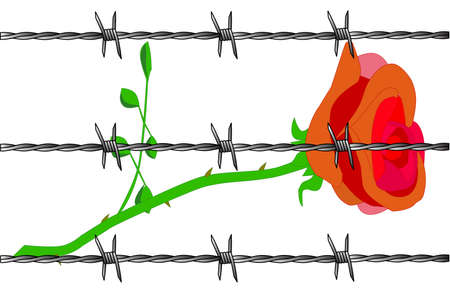 stabbed: A cartoon rose with barbed wire set on a white background