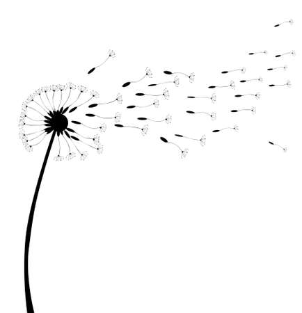 A dandelion in seed over a white background