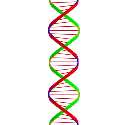 depiction: Cartoon depiction of the twin DNA ribons with conecting strands