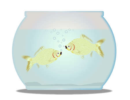 goldfish bowl: A trpical pet goldfish bowl with fish over a white background