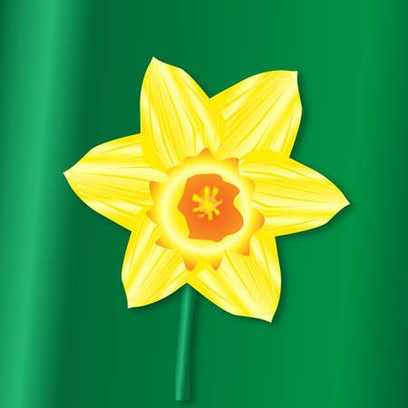 A Saint Davids Day daffodil over a green background