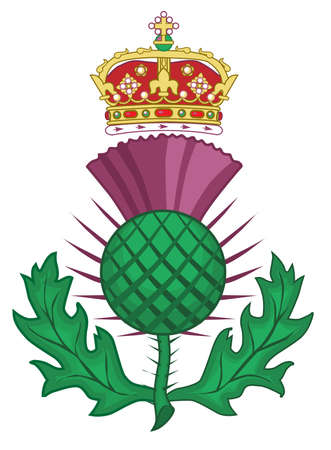 thistle: The thistle symbol of SCotland over a white background Illustration