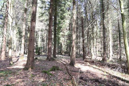 clearing: A clearing in the forest with bright sunlight