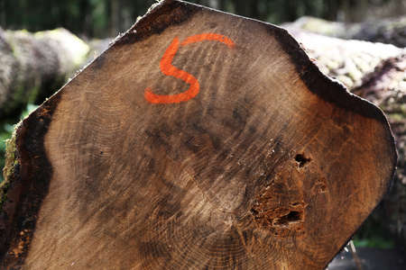sawn: A sawn log with the number 5 sprayed onto it Stock Photo
