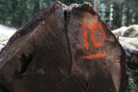 number ten: The end of a log with the number ten sprayed onto it Stock Photo