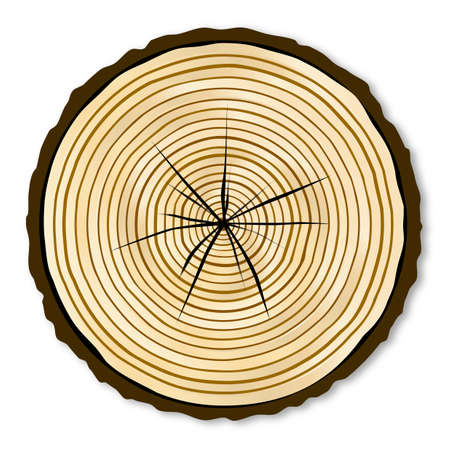 白地に薄い木の木材の端セクション