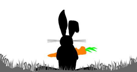 흰색 배경 위에 당근에 씹는 토끼