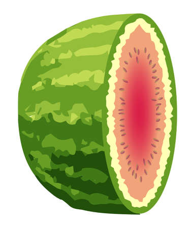 A typical watermelon sliced into half with seeds isolated on a white background 일러스트