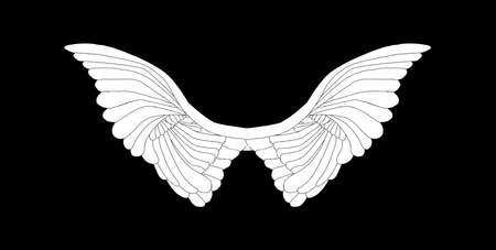 A large pair of white angelic wings spread over a black background