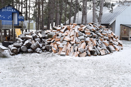 Massive Pile Of Firewood Cut By Lumberjack Pine Trees Covered In Light Snow