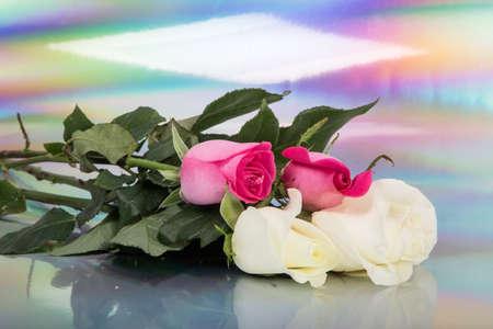 colorfull blured 배경에 두 멕시코 흰 장미와 함께 두 멕시코 분홍색 장미