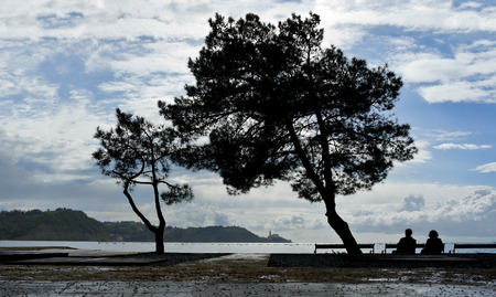 Silhouettes of trees and people sitting on a bench on the background of the sea photo