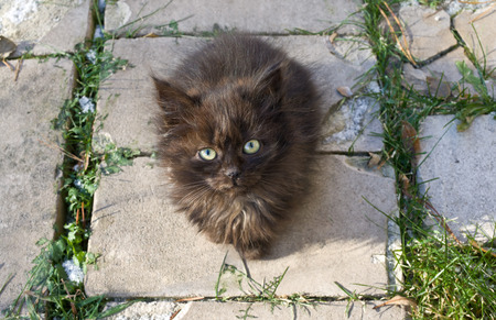 Homeless kitten sitting on brick walkway and looking at camera photo