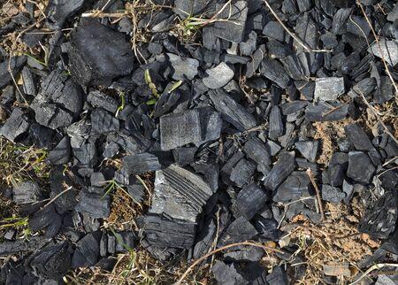 under fire: Hierba despu�s de un incendio es bajo un mont�n de carb�n Foto de archivo