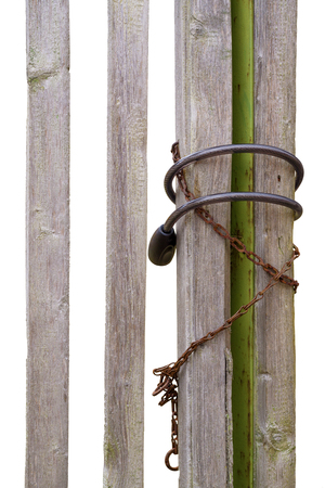 wicket gate: Fragment of wooden gate with lock and chain isolated white background
