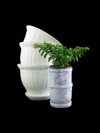 ornamentals: Empty ornamentals flowerpots and flowerpot with flower isolated on black background