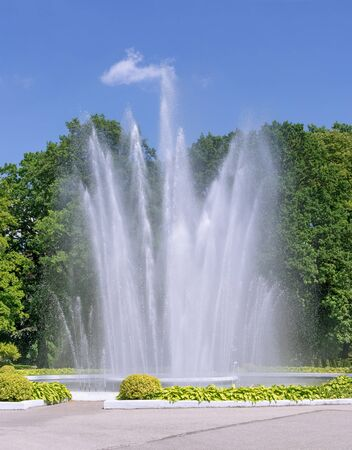 jets: Vertical jets of fountain on background of green trees.Blurred background