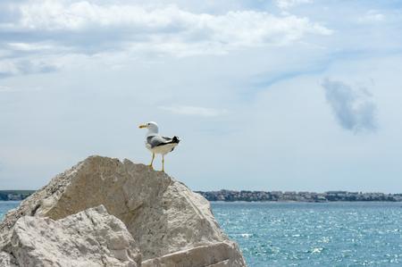 vastness: Seagull are sitting on rock near sea shore.Small depth of field